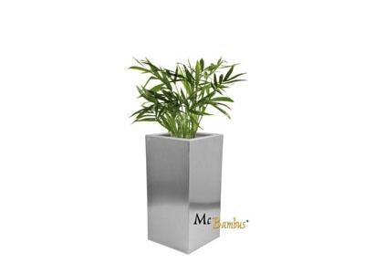 Mc-Bambus Bambus Mieten