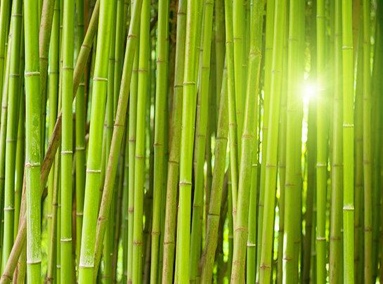 Mc Bambus Home Mc Bambus Der Profi Beim Thema Bambuspflanzen